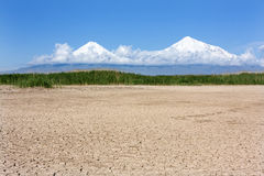 Parched lake with dam of reed in Ararat lowland the Mount Ararat. View of Mount Ararat in the white clouds with field of reeds and parched lake in front Stock Photography