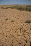 Parched lakebed dans le semi-désertique avec des fissures et le vegeta clairsemé Image libre de droits