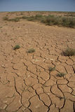 Parched lakebed in the semi-desert with cracks and sparse vegeta. Tion Royalty Free Stock Image