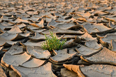 Parched land Stock Images