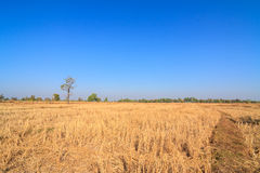 Parched rice field in countryside of Thailand Stock Photos