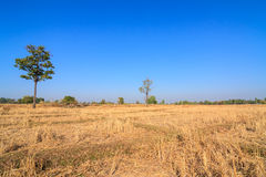 Parched rice field in countryside of Thailand Stock Photo