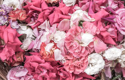 Parched rose petals Royalty Free Stock Photography