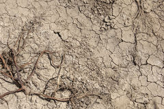Parched soil with dead vegetation plant Stock Images