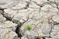 Parched Soil During Drought And Dry Season Royalty Free Stock Photos