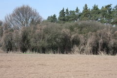Parched spring landscape. Dry spring landscape with field and bushes Royalty Free Stock Images