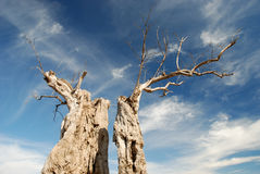 Parched tree in the desert Stock Photos