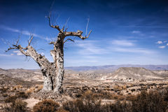 Parched tree in the desert landscape Royalty Free Stock Photos