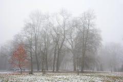 Parcheggi a dicembre dopo la prima neve in nebbia Fotografia Stock Libera da Diritti