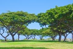Parcheggi gli alberi Fotografia Stock Libera da Diritti