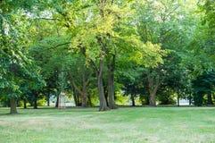 Parcheggi gli alberi Fotografia Stock