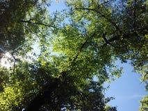 Parcheggi gli alberi Fotografie Stock Libere da Diritti