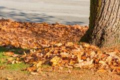 Parcheggi il prato inglese coperto dalle foglie gialle di tronco di albero dal lato fotografia stock