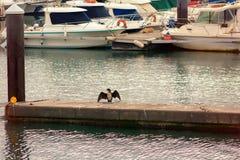 Parcheggio dell'yacht sulla spiaggia Immagini Stock