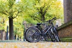 Parcheggio della bicicletta dentro l'università di Tokyo immagini stock libere da diritti