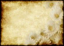 Parchemin de fleur Photo stock