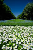 Parchi di Bucarest e giardini - Cismigiu Immagini Stock Libere da Diritti