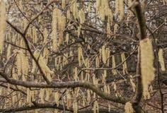 Parchi di Londra - alberi nell'inverno Fotografie Stock