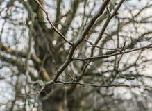 Parchi di Londra, Inghilterra - alberi ed i loro rami Fotografia Stock