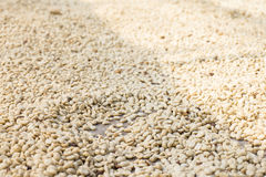 Parchment coffee Stock Photos