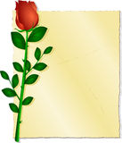 Parchment paper with a red rose Stock Image