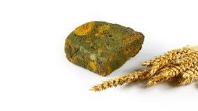 Parcialmente um naco do pão de centeio mouldy e dos brotos do trigo isolados no fundo branco, conceito de produtos incomíveis, co imagens de stock royalty free
