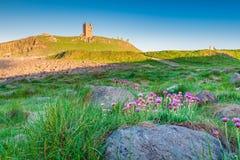 Parcimônia selvagem no castelo de Dunstanburgh imagem de stock royalty free