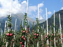 parcines jabłczani pobliski drzewa Zdjęcie Royalty Free