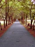Parco ad ottobre Fotografie Stock