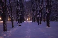 Parco alla notte una forte nevicata fotografia stock