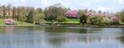 Parco allineato dagli alberi del fiore fotografia stock libera da diritti