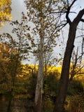 Parco Ann Arbor, Michigan dell'isola della passeggiata di caduta fotografie stock libere da diritti