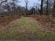 Parco autunnale del terreno boscoso con gli alberi, la felce aquilina, le foglie e l'erba verde fotografia stock