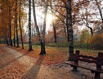 Parco in autunno Fotografia Stock Libera da Diritti