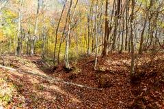 Parco in autunno Foresta in autunno Asciughi le foglie nella priorità alta Fotografie Stock Libere da Diritti