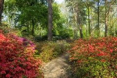 Parco Brema del rododendro immagini stock
