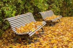 Parco calmo in autunno Immagini Stock Libere da Diritti