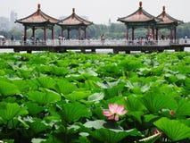 Parco cinese del loto Immagini Stock
