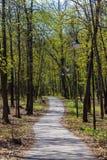 Parco in città durante il giorno soleggiato con gli alberi, banco, percorso della strada, lanterne della lampada nella primavera fotografie stock libere da diritti