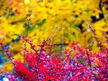 Parco Colourful immagini stock libere da diritti