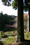 Parco con gli alberi ed i fiori Immagine Stock