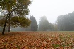 Parco con i vecchi alberi in nebbia di mattina fotografia stock libera da diritti