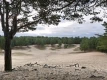 Parco con il pino e sabbia, dettagli e primo piano fotografia stock