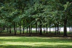 Parco con l'albero e l'erba verdi Fotografia Stock