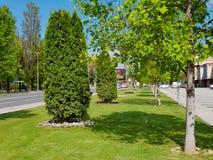Parco con l'albero verde ed erba per fondo e priorità alta immagine stock libera da diritti