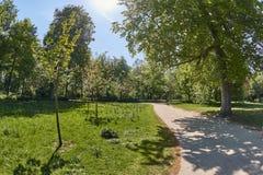 Parco con la linea di alberi fotografie stock libere da diritti