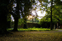 Parco con la strada Fotografia Stock