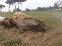 Parco degli Acquedotti在罗马 库存照片