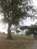 Parco degli Acquedotti在罗马 库存图片