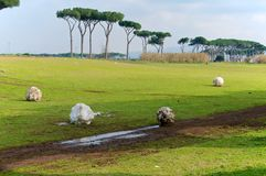 Parco degli Acquedotti śnieżne piłki, Rzym, Włochy Fotografia Royalty Free